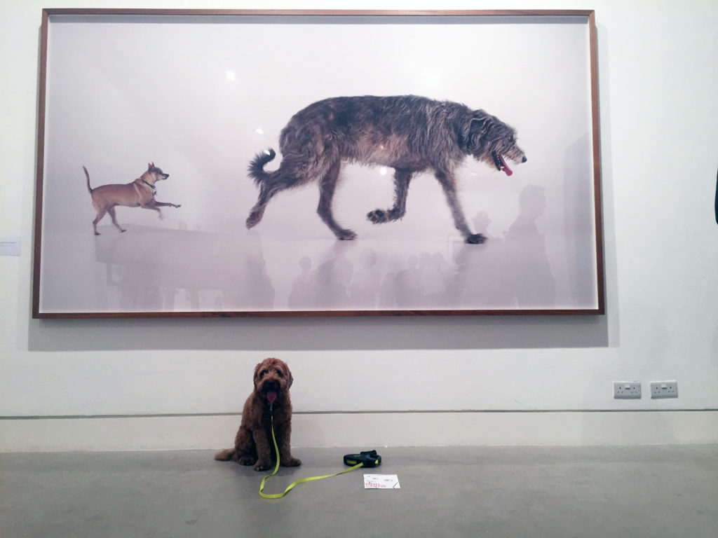 Pico poses in front of Martin Creed's Work No. 670, Orson and Sparky (2011)