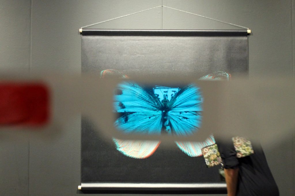 View of Spectres of the Postnatural: Gynandromorph Butterfly (2019) by Richard Pell. Image: Rain Embuscado.