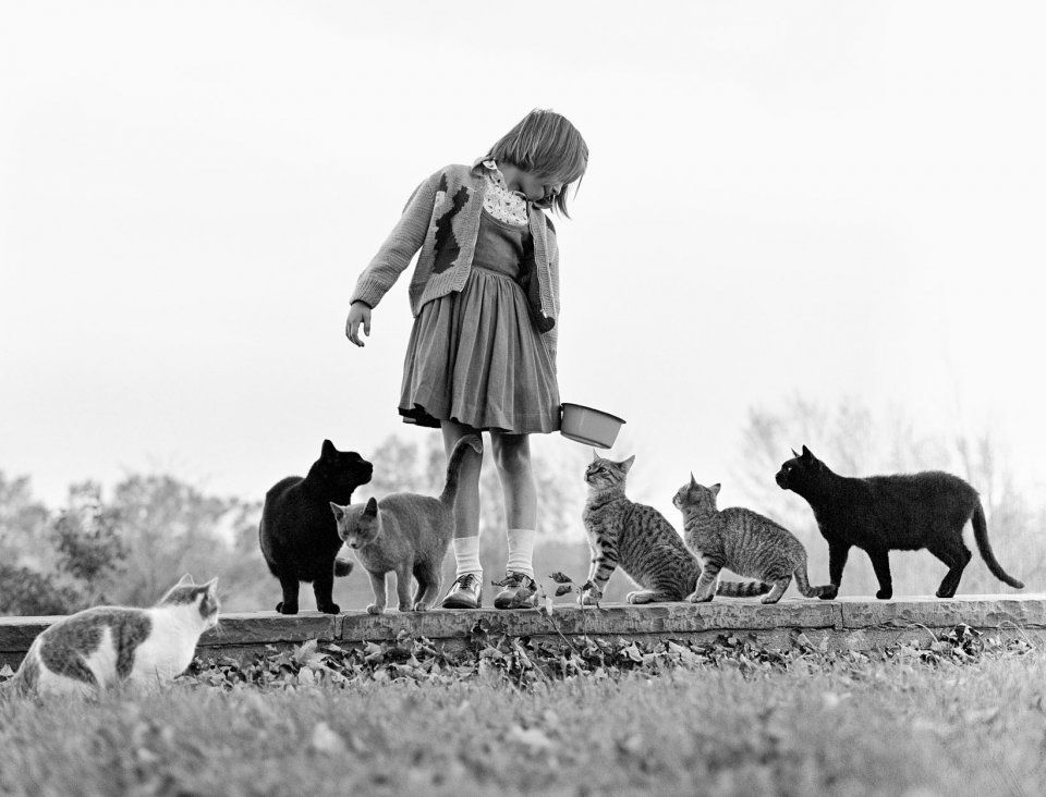 Walter Chandoha, Chandoha's Daughter Maria Feeds a Number of the Family Cats (1962). Photo courtesy of TASCHEN,©2019 Walter Chandoha.