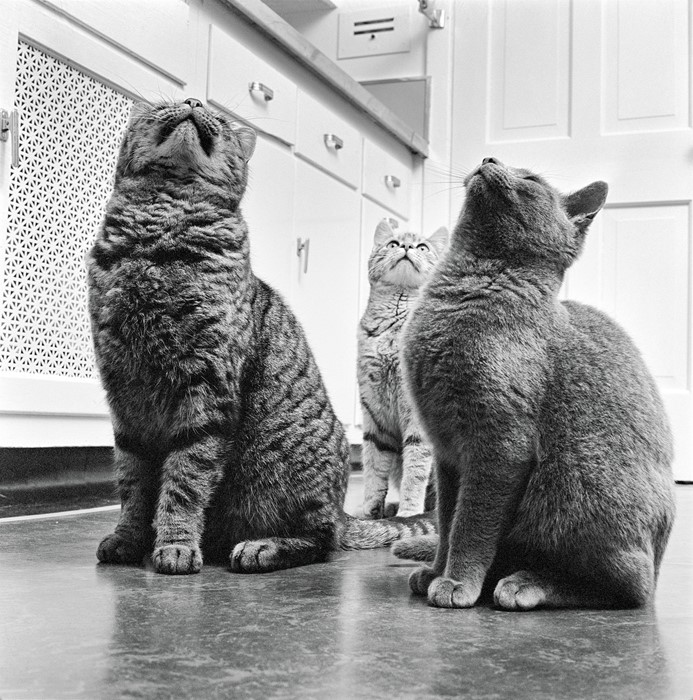Walter Chandoha, cats in New Jersey (1961). Photo courtesy of TASCHEN,©2019 Walter Chandoha.