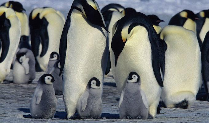 <em>March of the Penguins</em> directed by Luc Jacquet. Photo courtesy of Warner Bros.